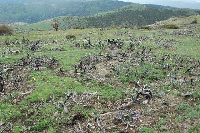 Quemas controladas y recuperación de zonas en el Montseny