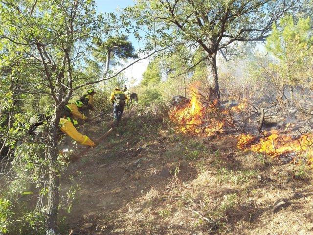 Brigadistas participan en un ataque directo contra el fuego