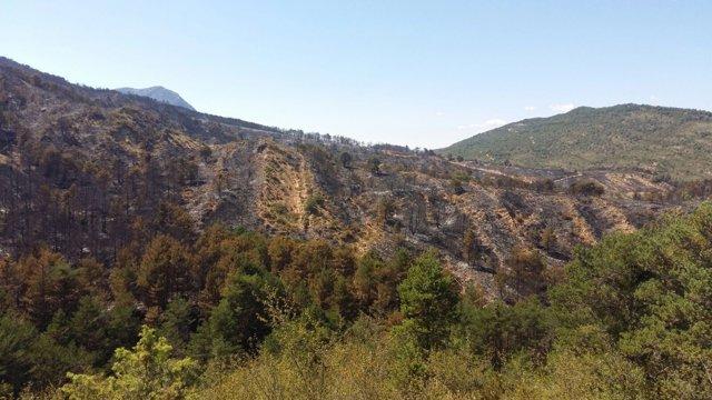 Superficie quemada en el incendio de Atarés y Santa Cruz de la Serós