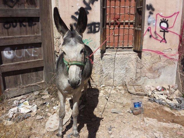 La Policía Local recupera un burro que había sido sustraído de una granja