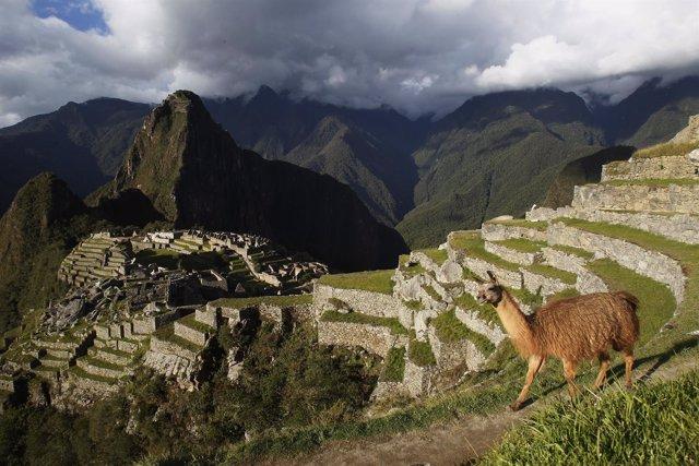 Una llama se ha visto cerca del Machu Picchu, Perú.