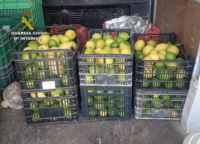 Guardia Civil esclarece la sustracción de dos toneladas de limón