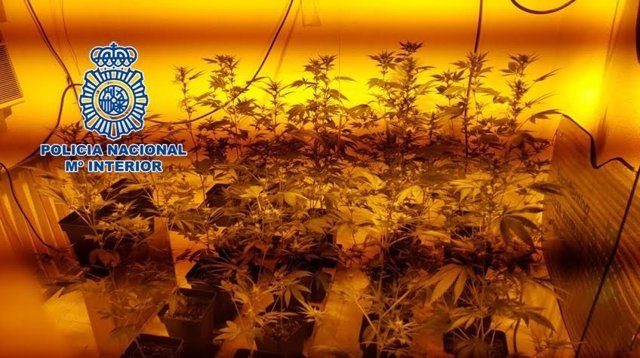 Plantación 'indoor' desmantelada por la Policía