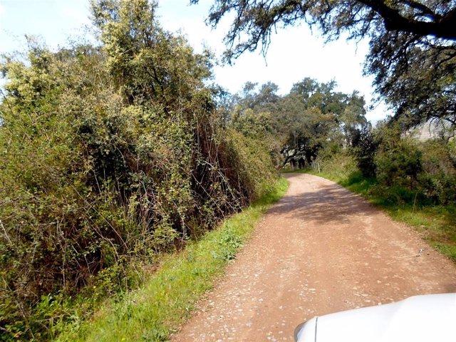 Un camino rural en Higuera de la Sierra
