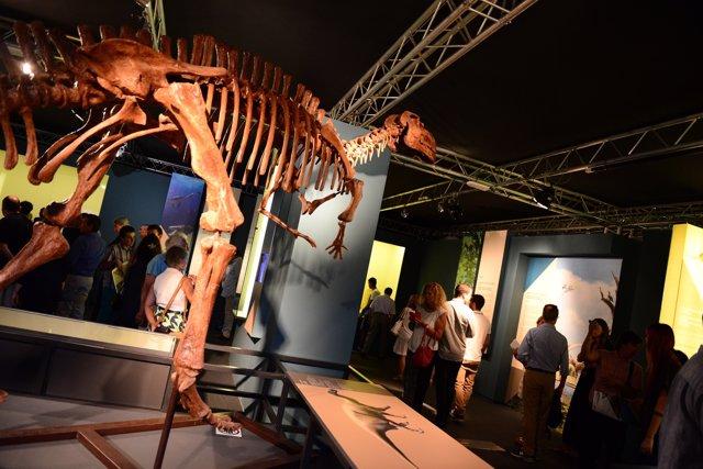 La muestra se ubica en la tercera planta del Museo Príncipe Felipe