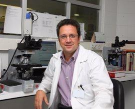 La vitamina D reduce el riesgo de rechazo tras un trasplante de médula