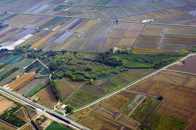Cultivos en Terres de l'Ebre