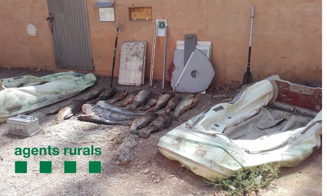 Material interceptado por los agentes rurales