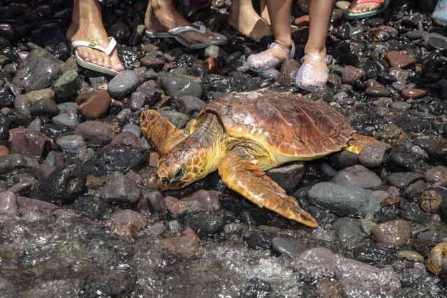Dos tortugas vuelven al mar en el Festival Bioagaete
