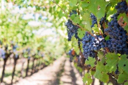 Los vinos de mayor precio impulsan las exportaciones de españolas, que crecen un 3,5%