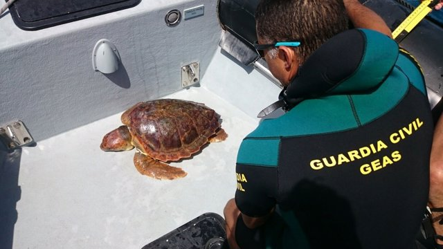 Imagen del cuerpo de la tortuga