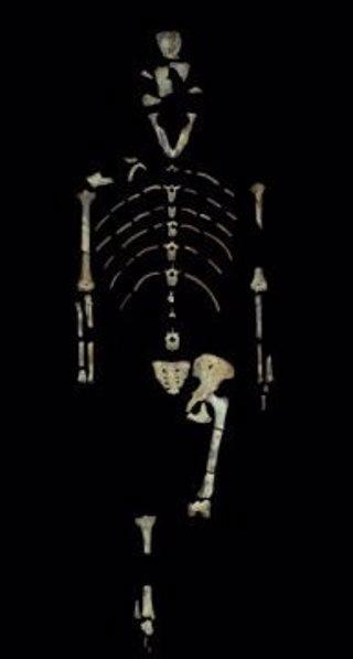 Restos óseos de Lucy