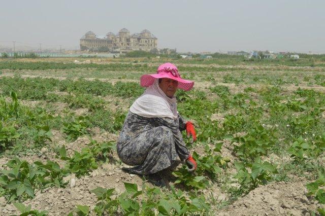 Granja orgánica gestionada por mujeres
