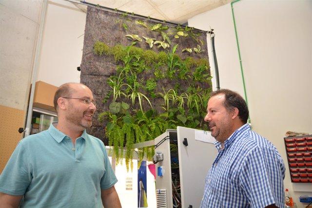Prueban En La UPCT La Eficacia De Los Jardines Verticales En Oficinas Para Purif