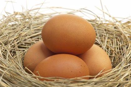 Alergia al huevo: lo que debes conocer