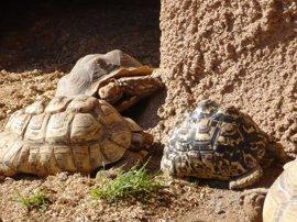 Se amplían este fin de semana las actividades del zoo de la Plaza Circular de Murcia