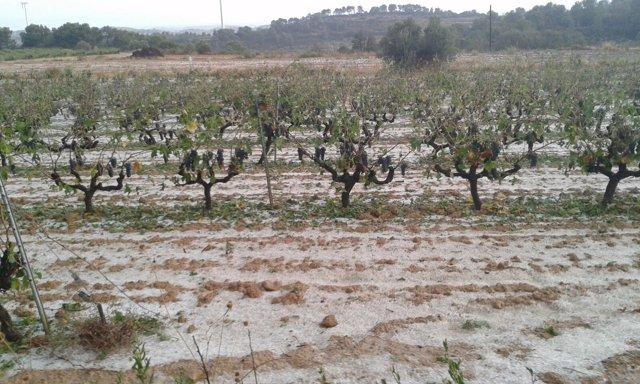 Viñedos de la Terra Alta (Tarragona)