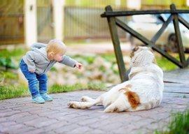 Los niños desconocen el peligro de acercarse a un perro asustado