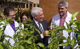Madrid estudiará los beneficios de los huertos 'terapéuticos'