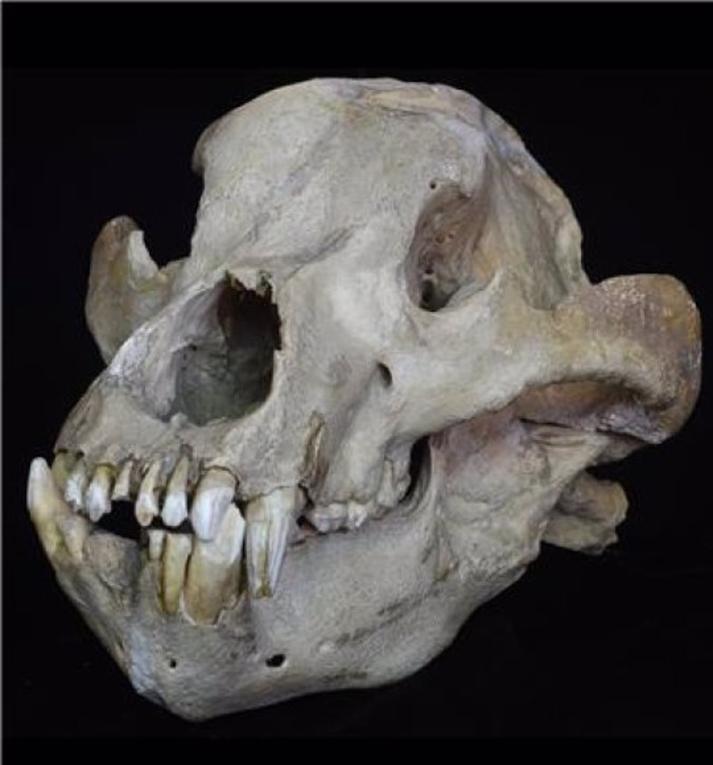 La biomasa marcó la diversidad de mamíferos durante millones de años