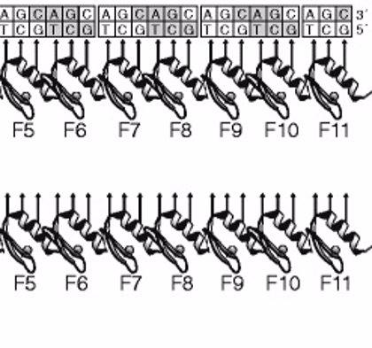 Logran reducir la actividad del gen causante de la enfermedad de Huntington