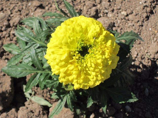 Flor, Plantas, Alergia, Primavera, Soleado