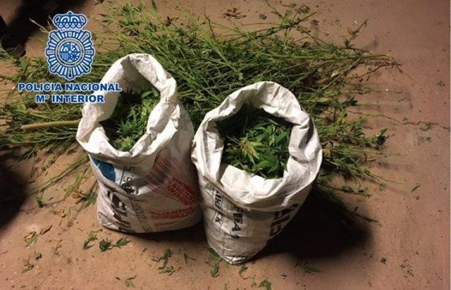 Marihuana intervenida en Córdoba