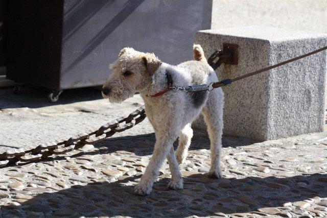 Perro, Calle, Perrete