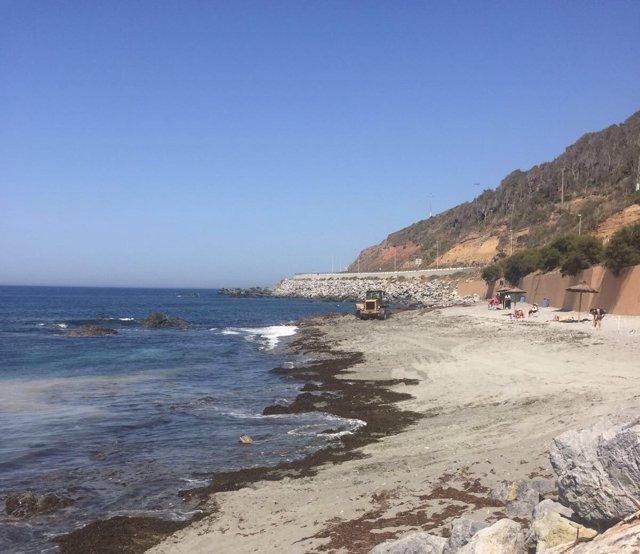 Algas en playas de Ceuta