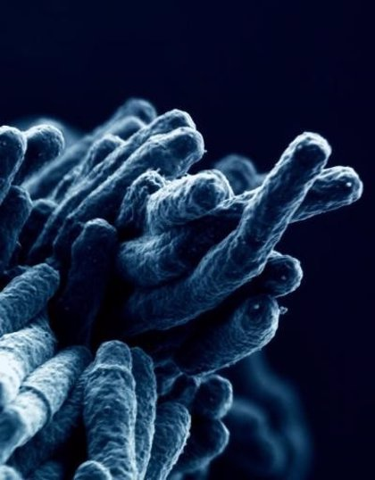 Los antibióticos desarrollados en 1960, prometedores contra la tuberculosis