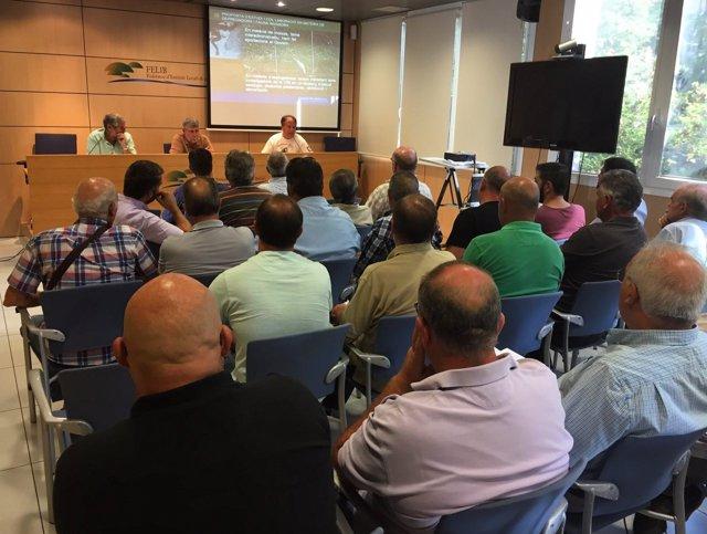 Reunión de las sociedades de cazadores de Mallorca