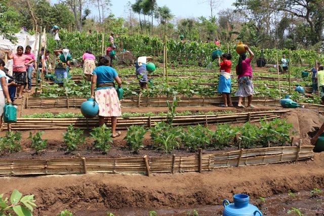 Mujeres salvadoreñas participan en actividades agrícolas tras las sequías