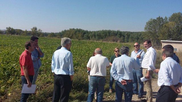 Visita a un campo de ensayo de variedades de remolacha
