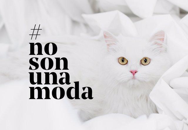 Np Fundación Affinity Lanza La Campaña #Nosonunamoda Contra El Abandono De Anima