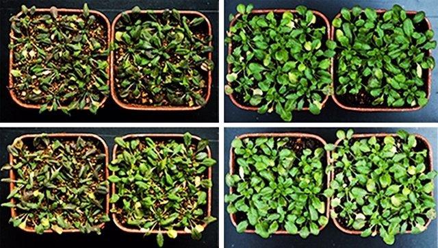 Descubiertas claves de la adaptación de las plantas ante la sequía