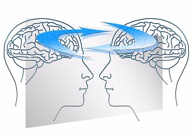 Cerebro. Conexiones cerebrales. Empatía.