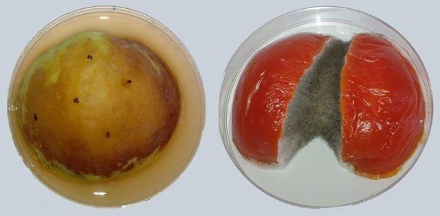 Fruto con moho