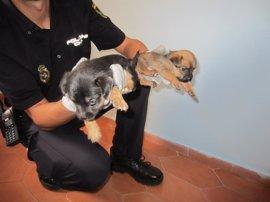 Detenidos tres hombres por vender cachorros en condiciones precarias