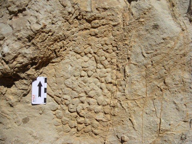 Impresión de la roca de la piel de dinosaurio