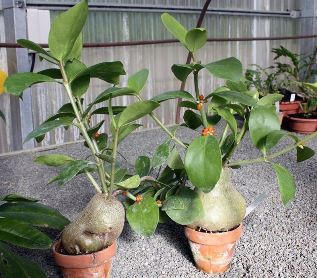 Concepción jardín botánico málaga muestra