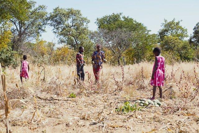 Efectos de la sequía en Zimbabue por 'El Niño'