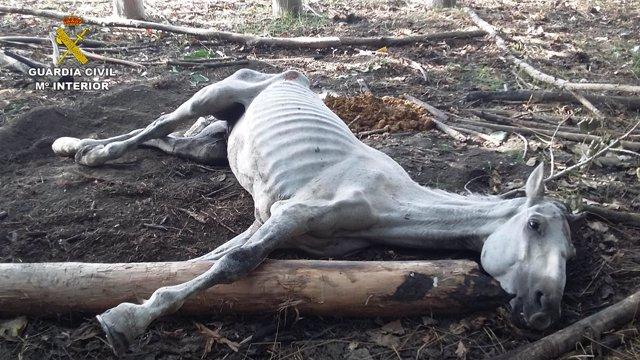 El caballo por el que se investiga a un ganadero de Maracena
