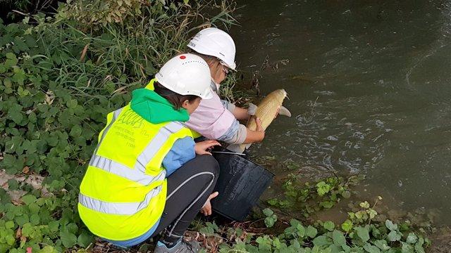 Rescate de peces en el canal de Serós