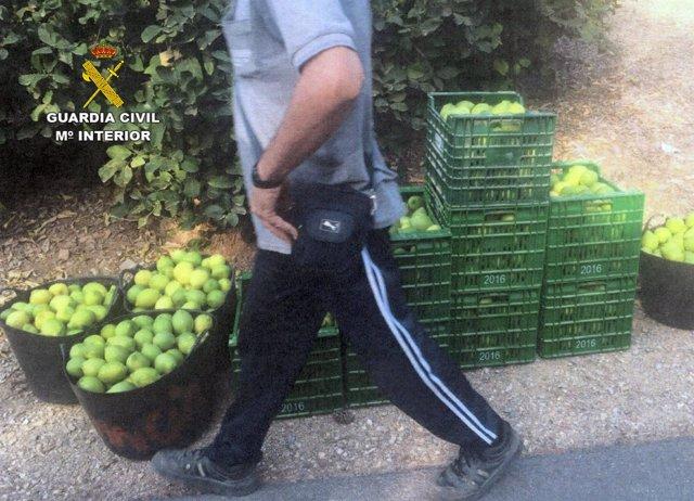 Imagen de cítricos robados
