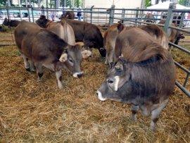 La Diputación de Huesca incide en una reforma de la PAC para garantizar la ganadería