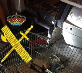 Sucesos.- Detenido el conductor de un camión interceptado con 40 kilos de hachís en el puerto de Algeciras