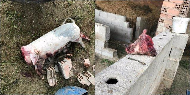 Imagen de los animales agredidos