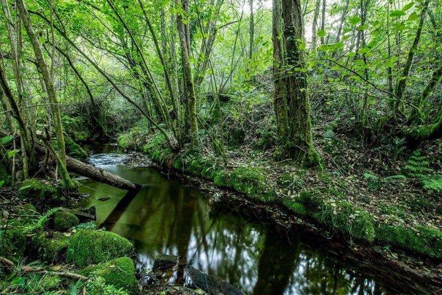 Instan a la restauración de cursos hidrológicos