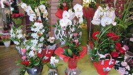 La Asociación de Floristas de Toledo pide mayor control a ayuntamientos sobre la venta ilegal de flores en Los Santos