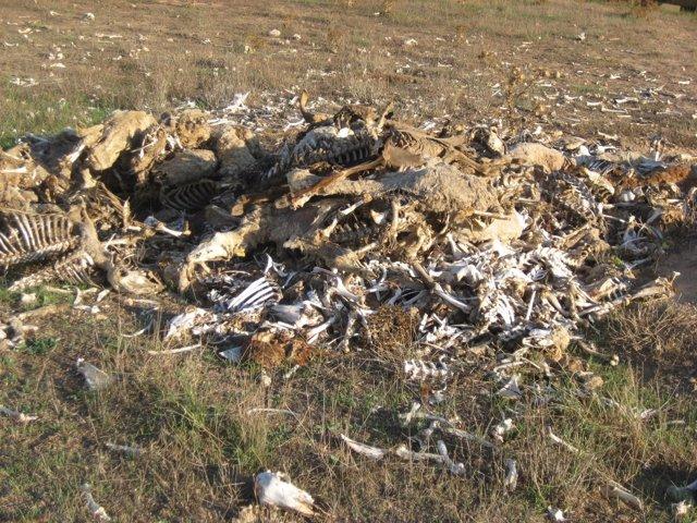 """PACMA denuncia situación de """"abandono"""" de animales en una granja de Titaguas"""